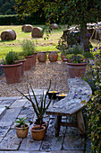 Designer Clare MATTHEWS: Devon GARDEN. OUTDOOR SEATING AREA with CURVED WOODEN BENCH AND GRAVEL AREA with TERRACOTTA CONTAINERS