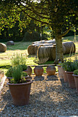 Clare MATTHEWS Garden, DEVON. GRAVEL AREA with HERBS IN LARGE TERRACOTTA POTS / CONTAINERS AND HANGING TREE SEATS. Designer Clare MATTHEWS
