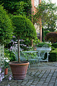 WILKINS PLECK, Staffordshire: Patio at THE BACK of THE HOUSE with CLIPPED TOPIARY IN A TERRACOTTA Container , HOSTA AND Metal TABLE AND CHAIRS