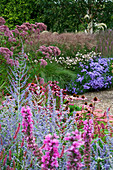 Lady Farm, Somerset: Designer, JUDY PEARCE - New PERENNIAL BORDERS with Aster FRIKARTII Mönch, Anemone TOMENTOSA ROBUSTISSIMA, EUPATORIUM PURPUREUM, LYTHRUM FIRE CANDLE, PEROVSKIA