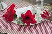 Hippeastrum (Amaryllis) , rote Blüten mit Asparagus (Zierspargel)