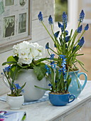 Blau-weißes Frühlings-Arrangement