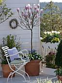 Balkon mit Magnolia soulangeana (Tulpenmagnolie) Stamm, Primula Belarina