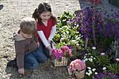 Kinder mit Primula acaulis (Primeln) am Frühlingsbeet