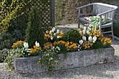 Steintrog mit Frühlingsbepflanzung in orange und weiß