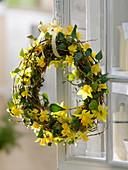 Frühlingskranz aus Narcissus (Narzissen), Hedera (Efeu)