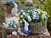 Blau - weißer Osterkorb : Viola wittrockiana 'Marina' (Stiefmütterchen)