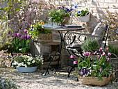 Frühlingsterrasse : Tulipa 'Ballade' 'Valentine' (Tulpen), Viola (Stiefmütter