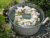 Kranz aus Malus (Apfelblüten) im Wasser