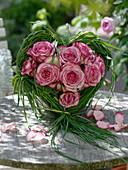 Rosa 'Variance' (Edelrosen) weiß mit pinkem Rand in Gras-Herz