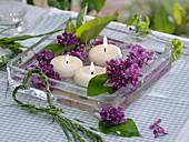 Syringa (Flieder) Blüten und Blätter mit Schwimmkerzen in Glasschale