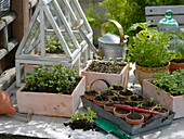 Gemüse - Anzucht in Frühling