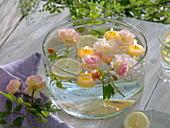 Rosa (Rosen - Blüten), Citrus limon (Zitronenscheiben) und Zitronenverbene