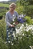 Frau schneidet Glockenblumen und Gräser für einen Blumenstrauß