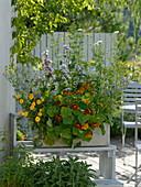 Aussaat - Kasten mit Blüten für Gourmets
