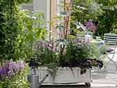 Fahrbarer Pflanzkasten mit Cleome spinosa (Spinnenpflanze), Amaranthus