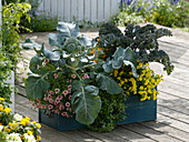 Kasten mit Gemüse und Balkonblumen
