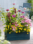 Blauer Kasten mit Sommerblumen