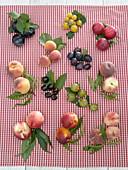 Steinobst / Prunus Tableau