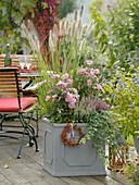 Anemone japonica 'Pretty Lady Emily' (Herbstanemone), Pennisetum 'Cassian'