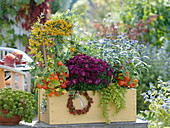 Herbstlich bepflanzter Kasten : Chrysanthemum multiflora 'Kilo'
