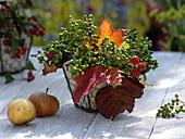 Beeren - Blätterstrauß : grüner Liguster (Ligustrum), Brombeeren und Blatt