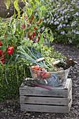 Gemüse-Ernte im Bauerngarten