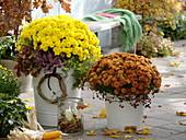 Chrysanthemum 'Hami' gelb , 'Kiroul' orange (Herbstchrysanthemen)