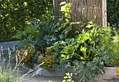 Trapezbeete als Gemüse- und Kräutergarten anlegen
