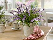 Strauß aus mexicanischem Busch-Salbei (Salvia leucantha)