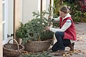 Frau stellt Kräuter zur Überwinterung in Korb mit Herbstlaub