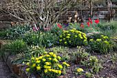 Frühlingsbeet mit Euphorbia (Wolfsmilch), Tulipa (Tulpen)