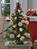 Kleiner Weihnachtsbaum aus Abies nordmanniana (Nordmanntanne)