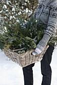 Frisch geschnittene Grünsorten zur Weihnachtsfloristik in Korb