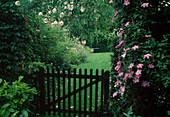 Clematis 'Comtesse de Bouchard'(Waldrebe), Rosa 'New Dawn'(Kletterrose) am Rosenbogen, hölzernes Gartentor