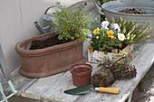 Terracotta - Jardiniere winterlich bepflanzen : 1/2