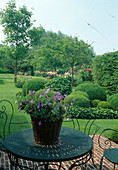 Formaler Garten mit Buxus (Buchs - Kugeln), Hedera helix (Efeu), Rosa (Rosen), Hecke, Laubbäumen, Rasen