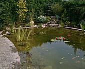 Teich mit Seerosen und Sumpfpflanzen