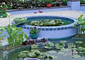 Blaue Teichbecken mit Seerosen im Kies