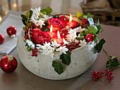 Rosa (Rosen), Narcissus 'Ziva' syn. 'Paperwhite' (Tazetten), Ilex
