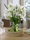 Duftender Stehstrauß in Schale : Narcissus 'Ziva' syn.'Paperwhite'