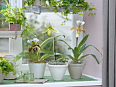 Orchideenfenster