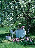 weiße Metallsitzgruppe unter blühendem Malus (Apfelbaum)
