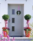 Buxus (Buchsstämme) in roten Kübeln vor der Haustür