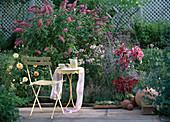 Buddleja 'Pink Delight' / Schmetterlingsflieder