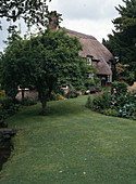 Reetdachhaus mit Malus (Apfelbaum) als Hausbaum