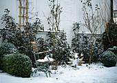 Garten im Winter, Stuhl mit Schnee, Terracottatopf, Hahn, Rosen, Buchs
