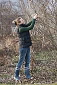 Frau schneidet Zweige von Blütensträuchern zum Antreiben