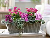 Korbkasten rosa-pink bepflanzt