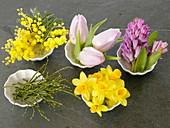 Acacia (Mimosen), Hyacinthus (Hyazinthen), Narcissus